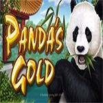 Panda`s Gold